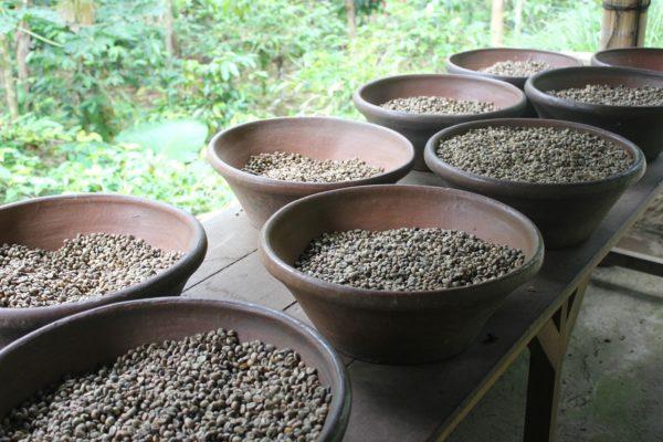 SATRIA COFFEE UBUD BALI